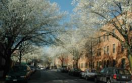 Columbia Street is one of the few areas in South Brooklyn that still maintains a feel of the 20th century with flowering trees lining the street.